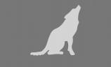 Wolf Tone Recorders